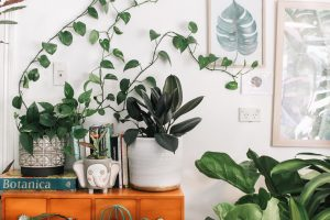 The 10 Best Indoor House Plants
